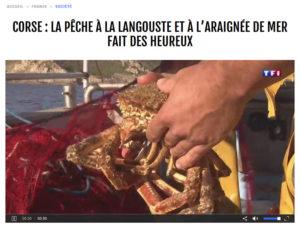 Relevé sur LCI/TF1 du 16 juin 2017 : «Corse : la pêche à la langouste et à l'araignée de mer fait des heureux»